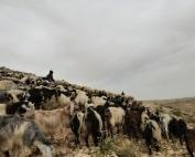 Um al-Khair, Palestine
